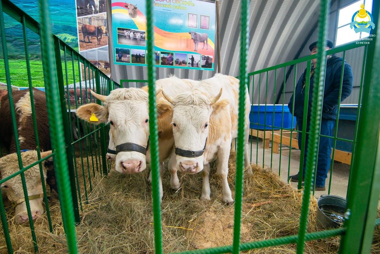 В Улан-Удэ пройдет выставка племенных сельскохозяйственных животных «Байкал Агро»