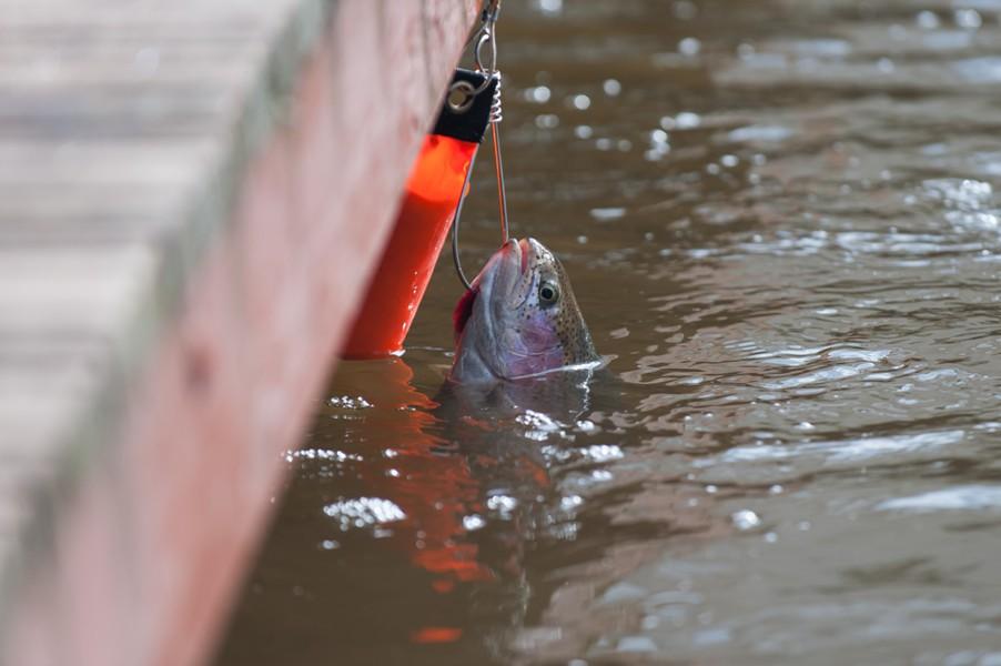 Места, где запрещается ловить рыбу в период нереста